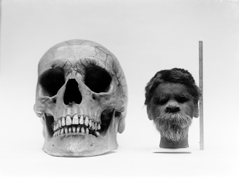 Shrunken_head_compared_with_normal_human_skull._Wellcome_M0003687-e1458016539495