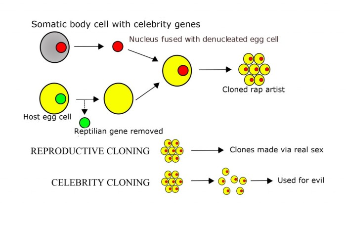 2000px-Cloning_diagram_english_svg-1024x675