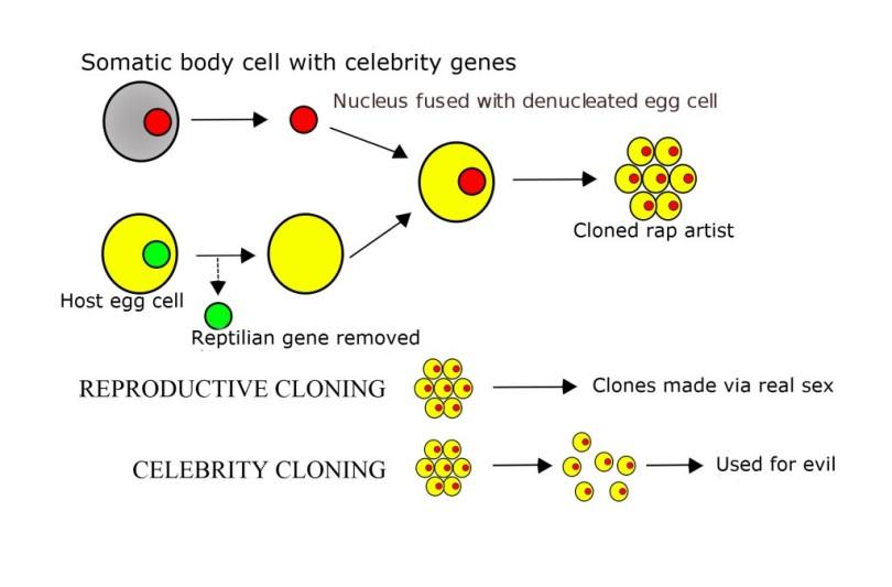 2000px-Cloning_diagram_english_svg-1024x675