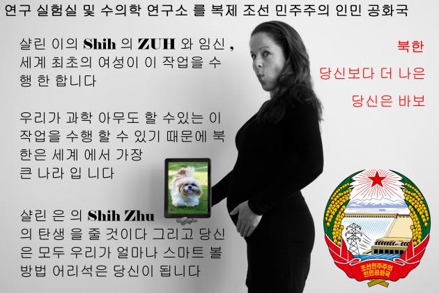 shih-tzu-630x420