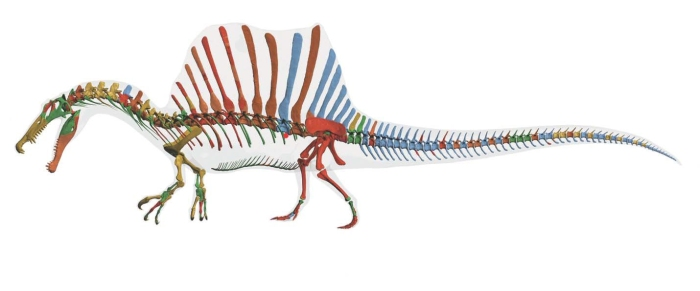 spinosaurus-reconstruction